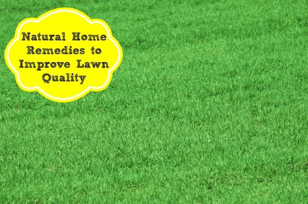 natural home remedies for lawn