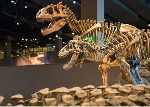 Natural History Museum Free Admission Days