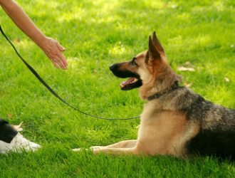 """When Does Dog Training Become """"Too Intense?"""""""