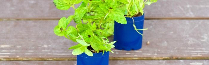 DIY: Upcycle Deodorant Containers Into Herb Gardens