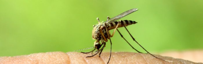 How to Make Flying Insects Bite The Dust
