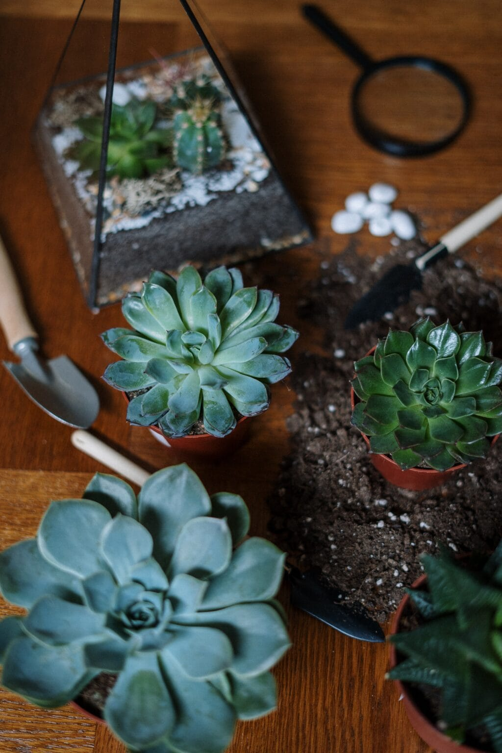 succulent plants and dirt on a table